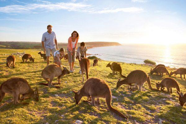 Familly Playing With Kangaroos