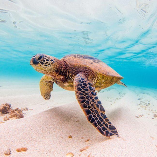 Turtle Touring Treasures