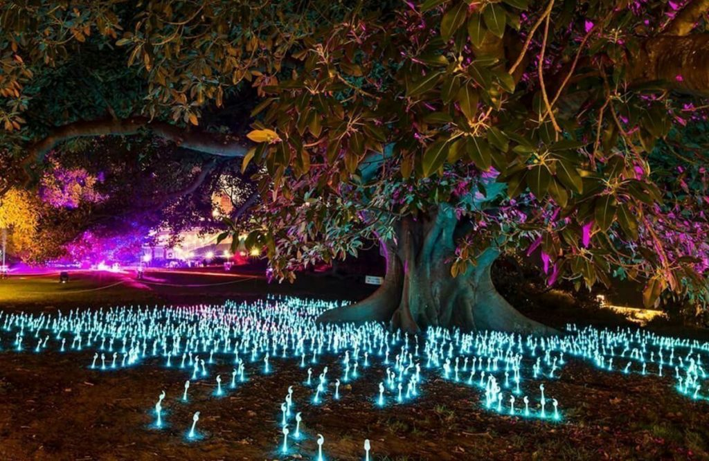 Vivid Sydney Light