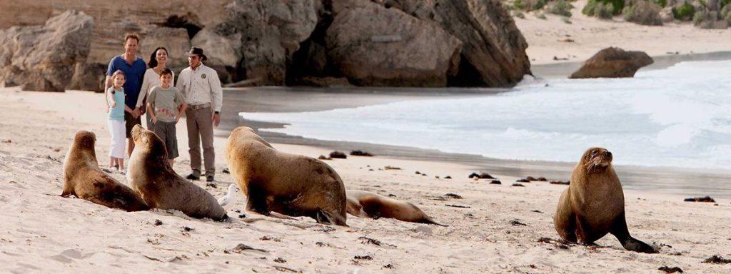 Seal Bay Ecotourism