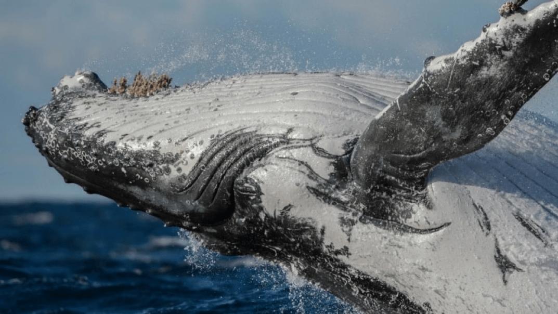Whale Australia Wildlife
