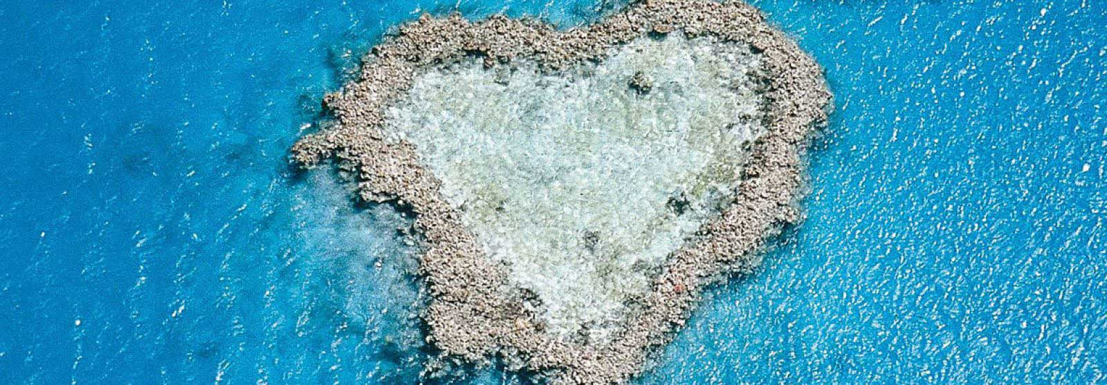 Med Heart Reef
