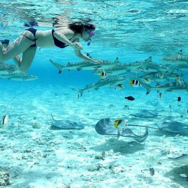 Conrad Bora Bora Snorkeling