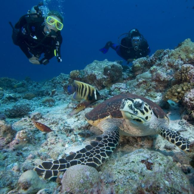 Divers and Turtle