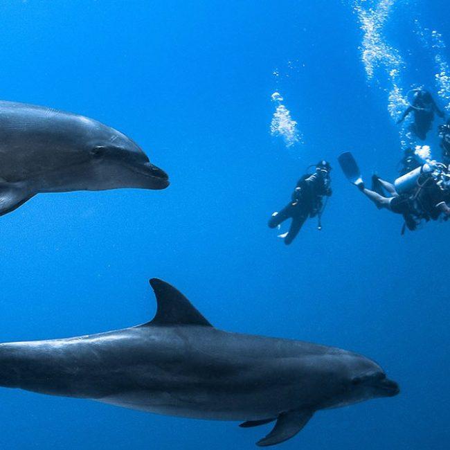 Rangiroa Dolphins