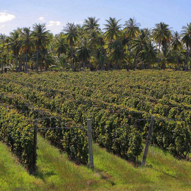 Rangiroa The Vin de Tahiti Winery