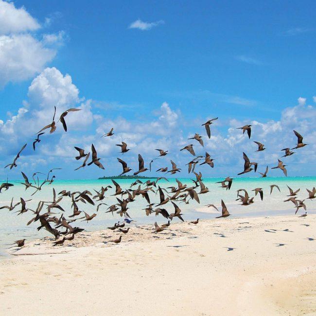 The Brando Birds