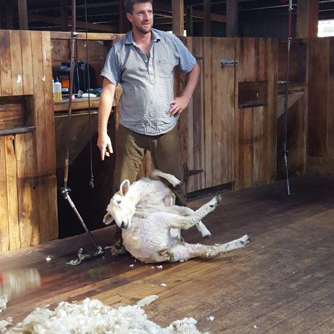 Wharekauhau Farm Tour