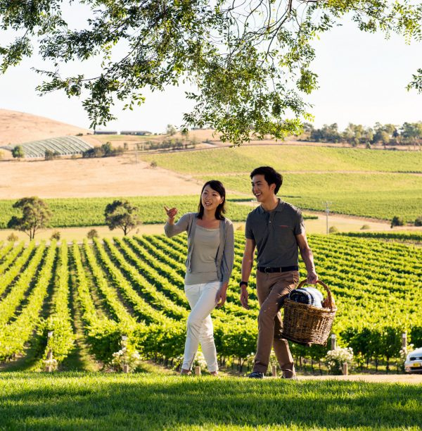 Ultimate Winery Experience