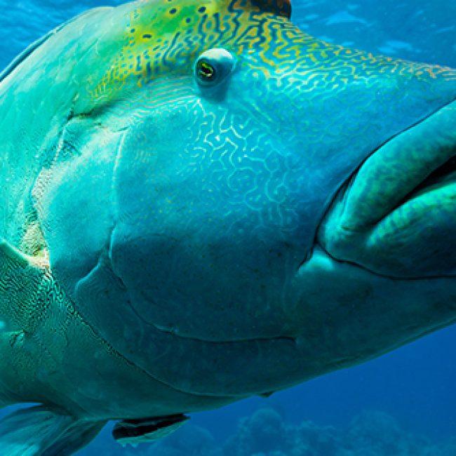 Big-Fish_Ribbon-Reefs