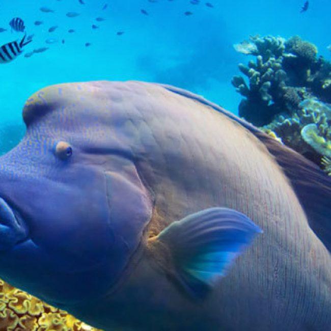 Coral-Garden_-Great-Barrier-Reef