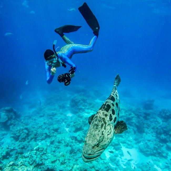 Lizard_Island_Snorkeling_Cod