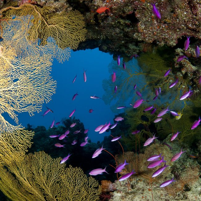 colourful-coral-gardent